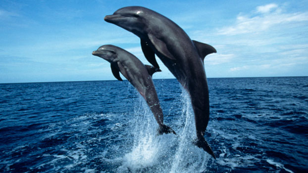 dolphins-new-zealand